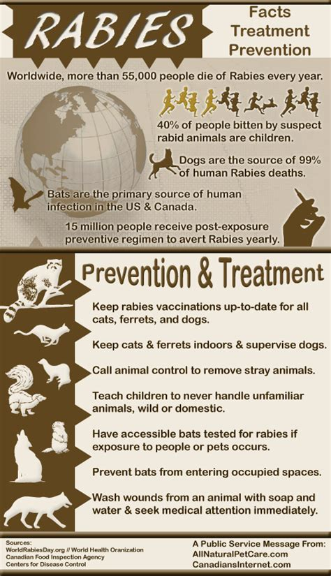 Rabies Facts, Treatment, and Prevention - Animal Health Center