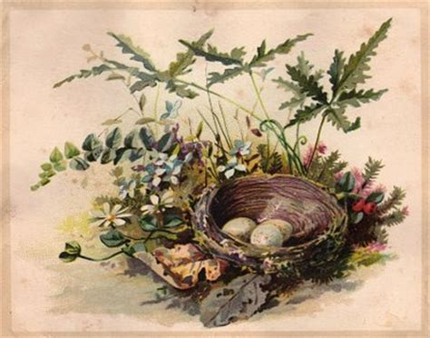 Free Vintage Clip Art - Darling Nest with Eggs - The